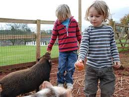 child with pig