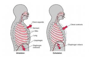inhalation and exhalation biology
